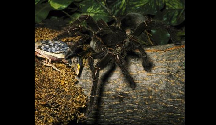 Dünyanın En Korkunç 10 Hayvanı Zooloji Haberleri