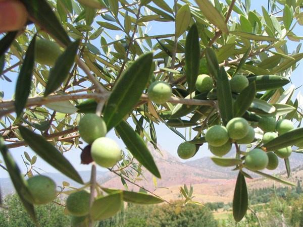 Fotoğraf: Tarım ve Orman Bakanlığı