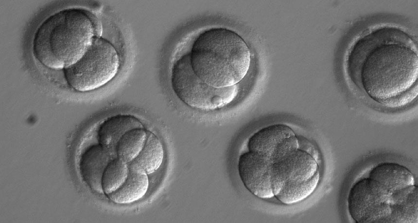 Bir Araştırma ve Eleştiriler: İnsan Embriyosunu CRISPR ile Değiştirmek Mümkün mü?