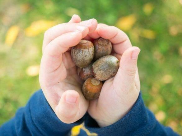 Her çocuğun bir Naturalist olarak doğduğunu biliyor muydunuz?