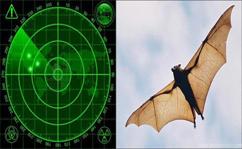 Yarasalar ve mükemmel radar sistemleri