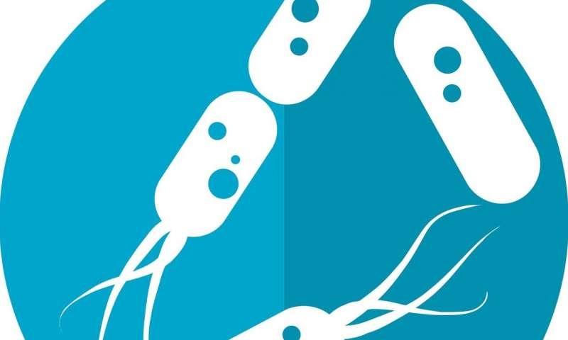 Genetik Bilgi Sadece Sperm ve Yumurta İle Aktarılmaz!
