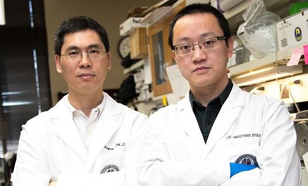 Researchers enhance CRISPR gene editing technology