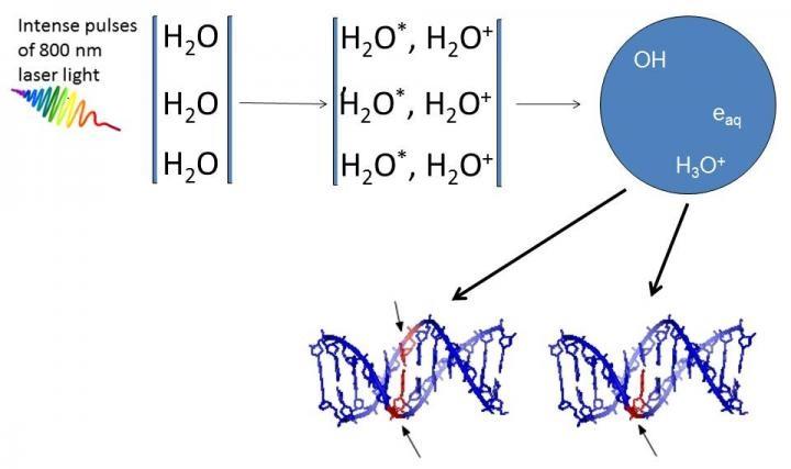 DNA damage by ultrashort pulses of intense laser light