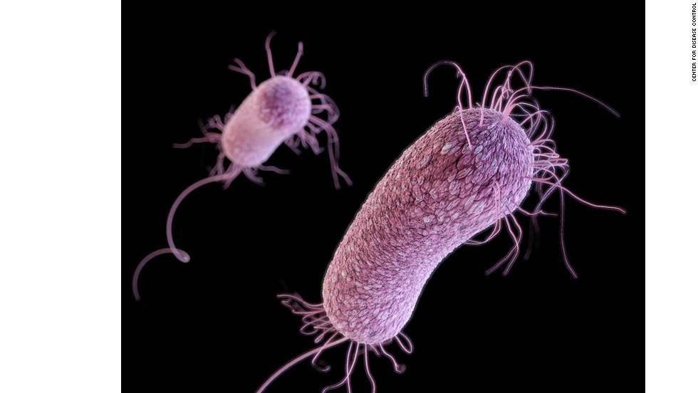 Modifiye E.coli Suşu, Superbug Pseudomonas aeruginosa' ya karşı