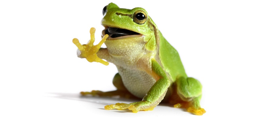 Kurbağalar, iki yaşamlılar (Amphibia)