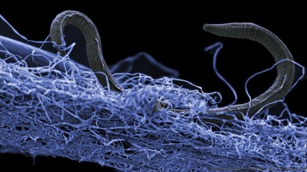 Bilim Adamlari Milyarlarca Mikroorganizma İçeren Çok Büyük Yeralti Ekosistemi Tespit Ettiler