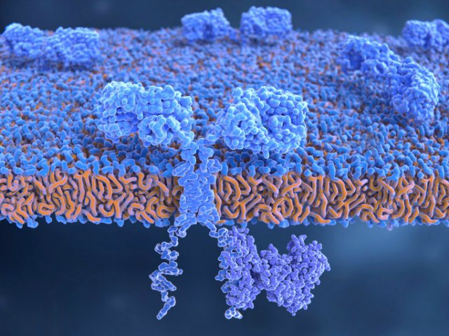Görsel: Tasarımlanmış bir T-hücresinin yüzeyindeki kimerik antijen reseptörlerin örneklemesi. (ISTOCK, SELVANEGRA)