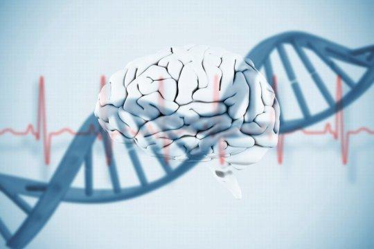 Genomdaki virüsler beynimiz için önemlidir!