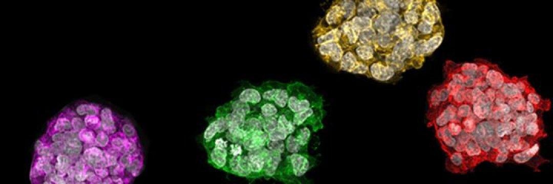 İnsan Kök Hücre Bölgelerinin Moleküler Yol Haritası