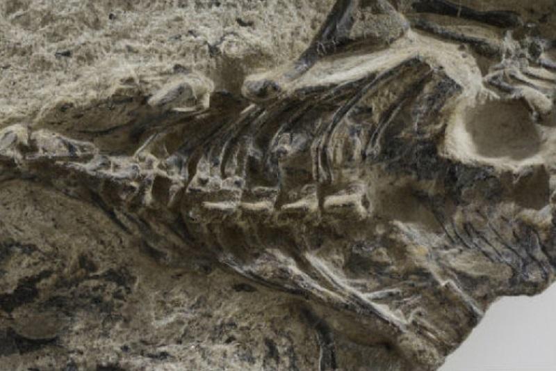 Dünya'nın en eski kertenkele fosili keşfedildi