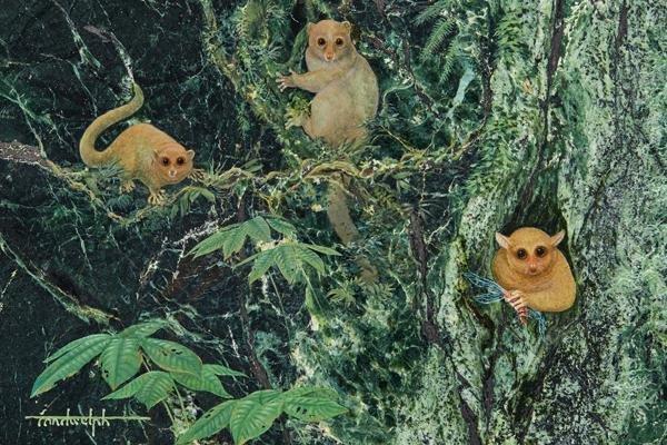 Üç yeni primat keşfedildi