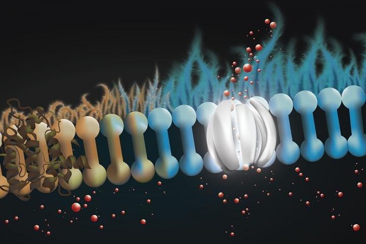 Kistik Fibroz Hastalığının Tedavisi İçin Moleküler Protez Geliştirildi