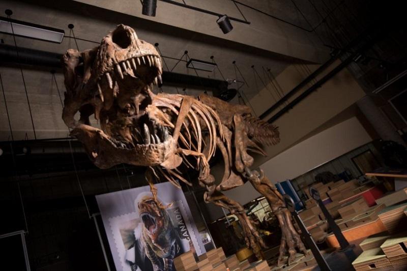 """Dünya'nın En Büyük """"Tyrannosaurus Rex""""i"""