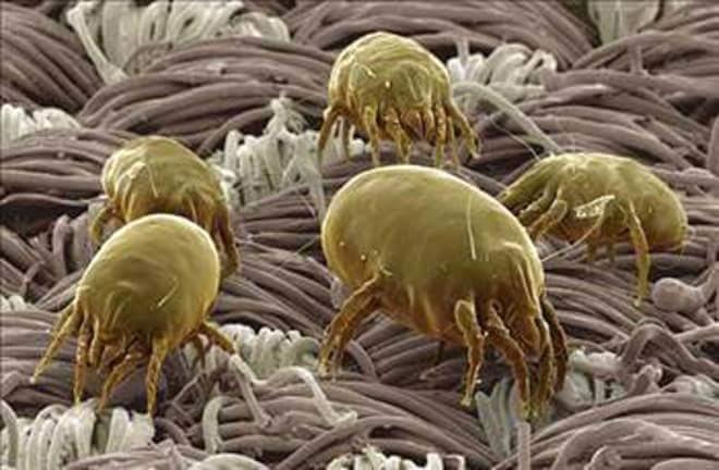 3cm² de kaç milyon mikroskobik canlı