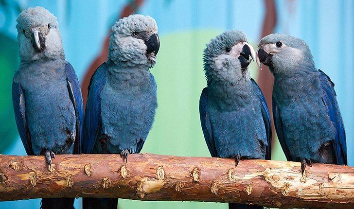 Artık en büyük tehlike ormansızlaşma: Son 10 yılda 8 kuş türünün soyu tükendi