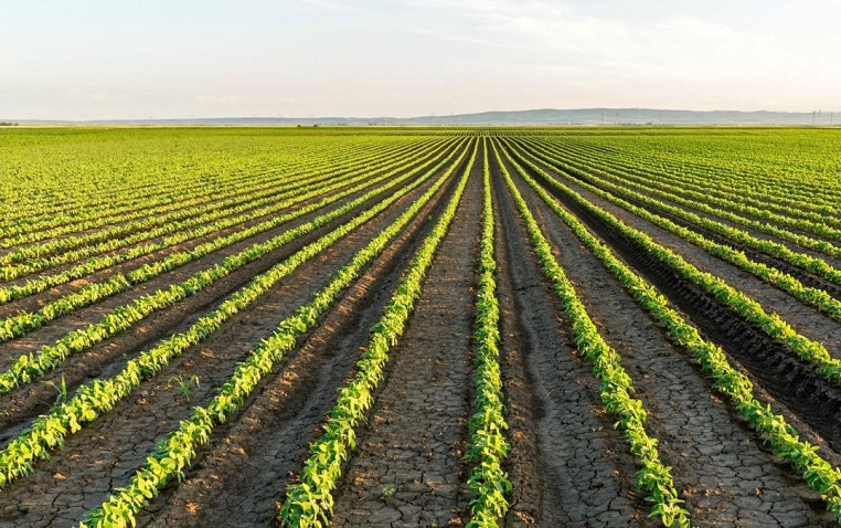 Organik tarım ve ekolojik/organik ürün nedir?