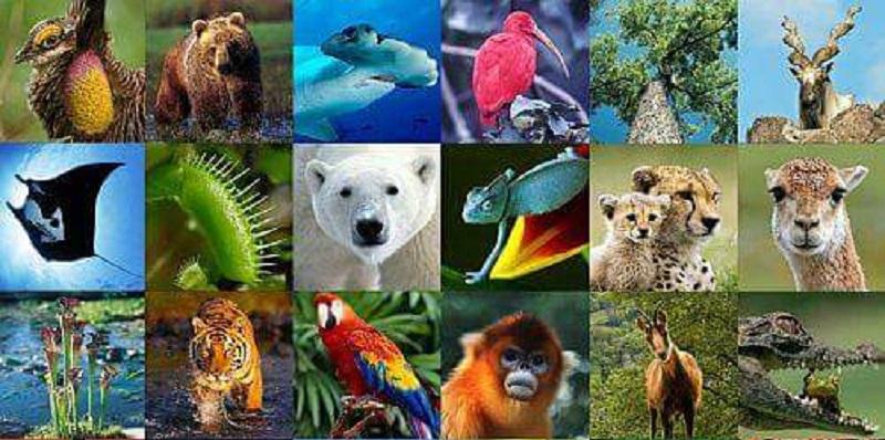 Bugün Dünya Biyolojik Çeşitlilik Günü