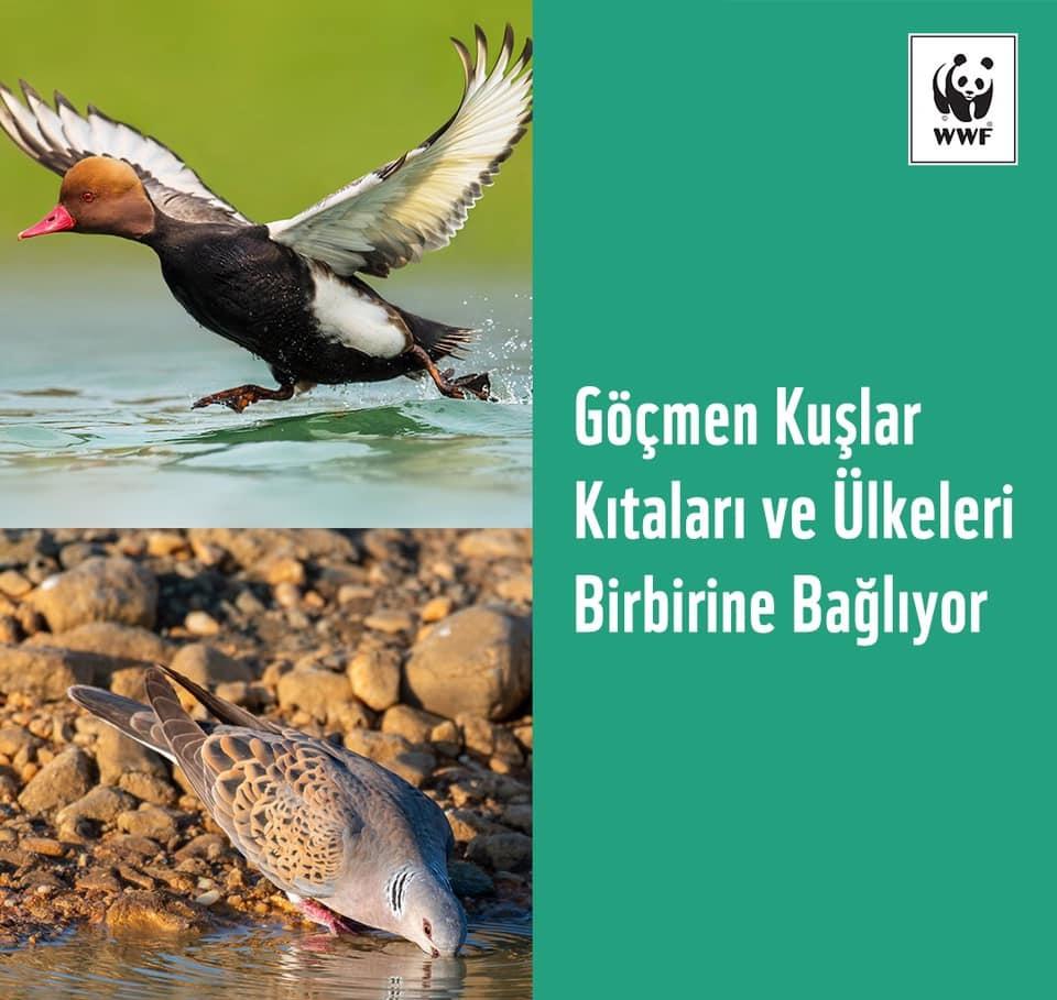 Fotoğraf: WWF Türkiye (Doğal Hayatı Koruma Vakfı)