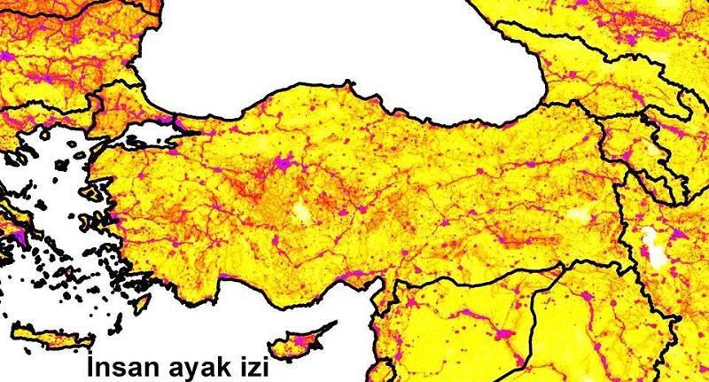 Anadolu'da orman türleri için potansiyel bağlantısallık (connectivity) denemesi