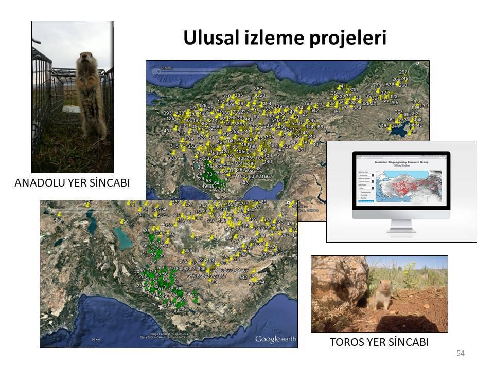 Anadolu'nun Geç Kuvaterner Biyocoğrafyası