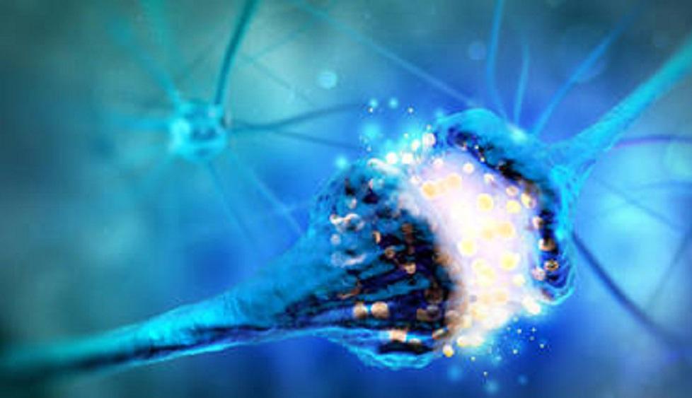 Bu görüntü bir sinaps yorumudur ve elektrik sinyalleri gönderen iki nöron hücresini gösterir.  Andrii Vodolazhskyi / Shutterstock