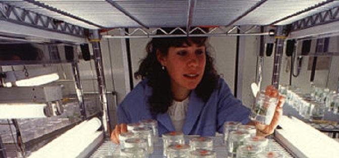 Rekombinant DNA Teknolojisi