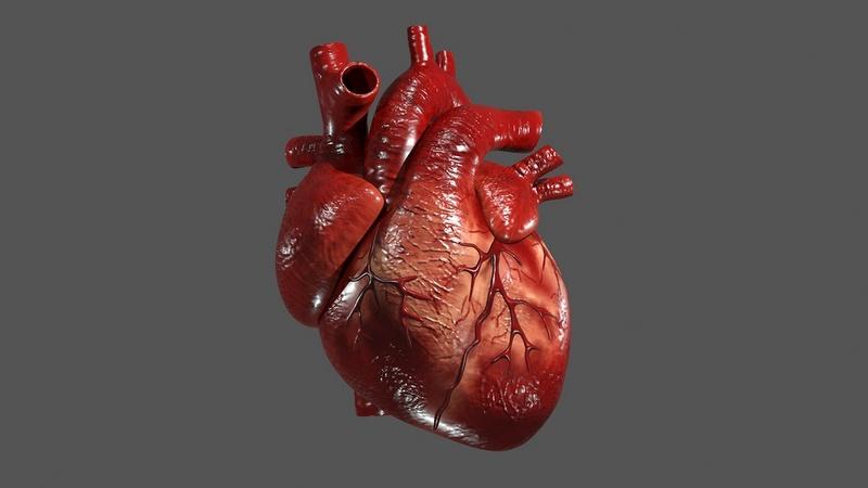 Üç boyutlu (3B) yazıcıda insan kalbi basmak!