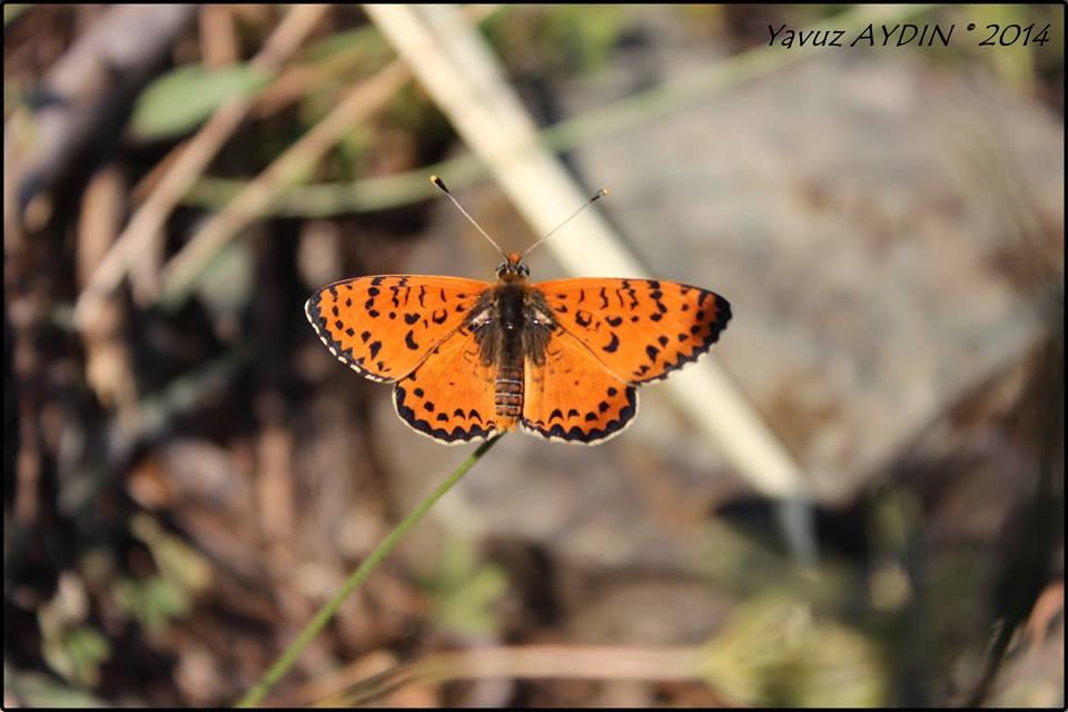 Kelebekler Hakkında Bilgi