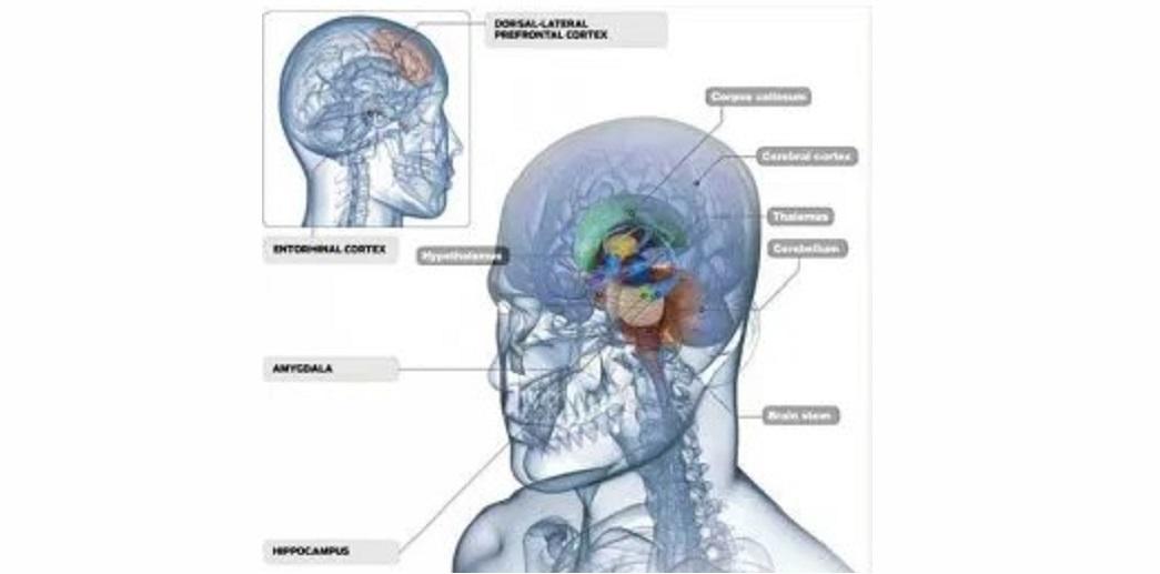 Beyindeki Beyaz Madde Nedir?