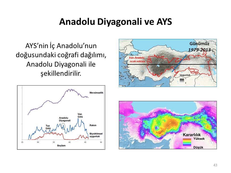 Anadolu Diyagonali ve Anadolu Yer Sincabı (AYS)