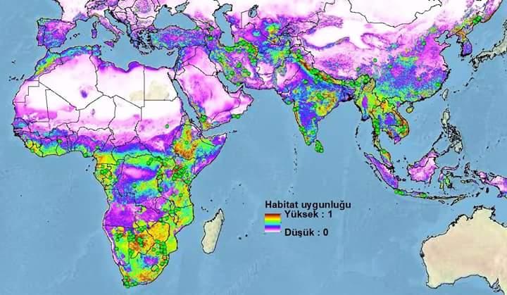 Anadolu leoparı (Panthera pardus) yaşıyor mu?