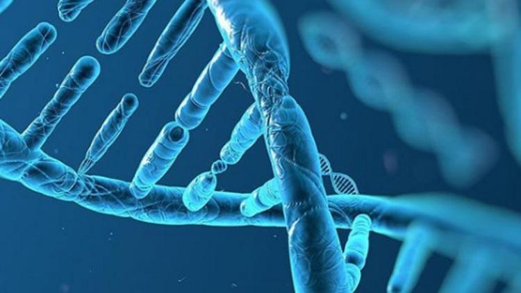 Gen mutasyonu nedir ve mutasyonlar nasıl oluşur?