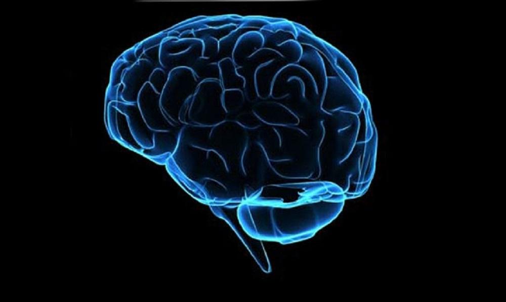 Bağırsaktaki Mikroplar Beyni Etkileyebilir mi?