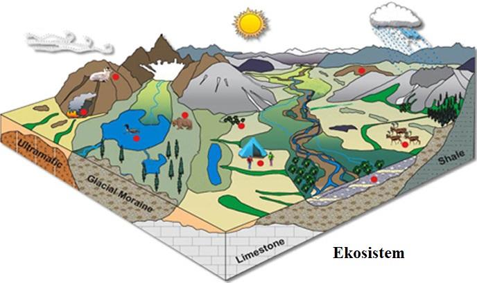 Dünyada Bulunan Ekosistem Çeşitleri Nelerdir?