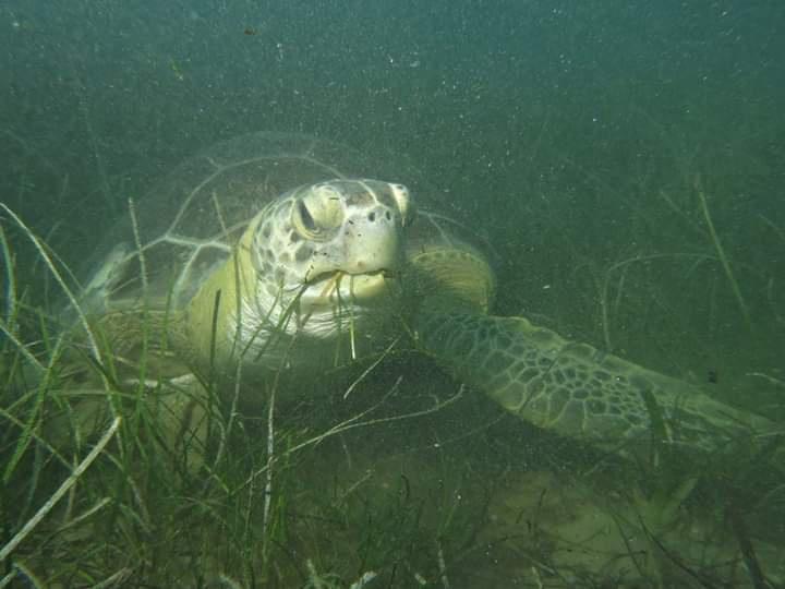 Deniz Kaplumbağaları Bilim Komisyonu Toplantısı Mersin'de Yapıldı