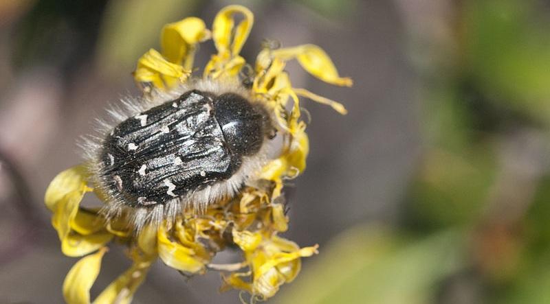 Bitki zararlısı böcekler