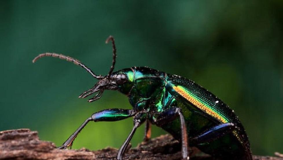 Böcekler öldüklerinde neden ters döner?