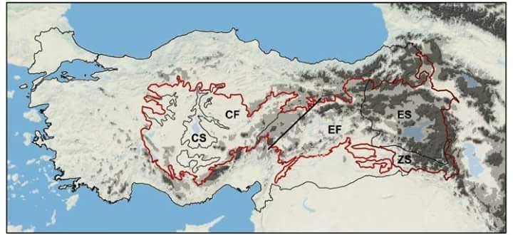 Anadolu Diyagonali