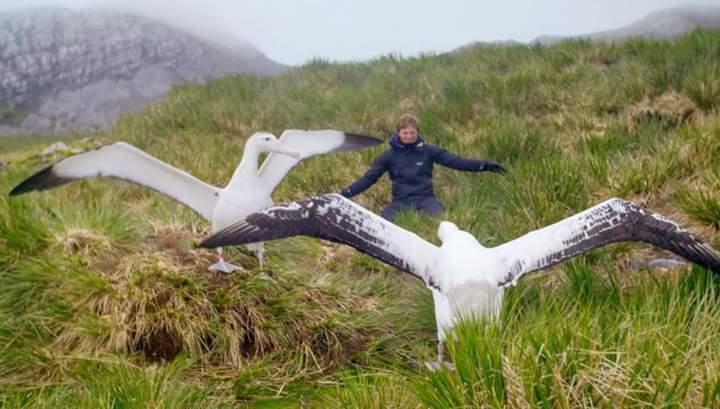 Albatros dünyanın uçan en büyük kuşudur.