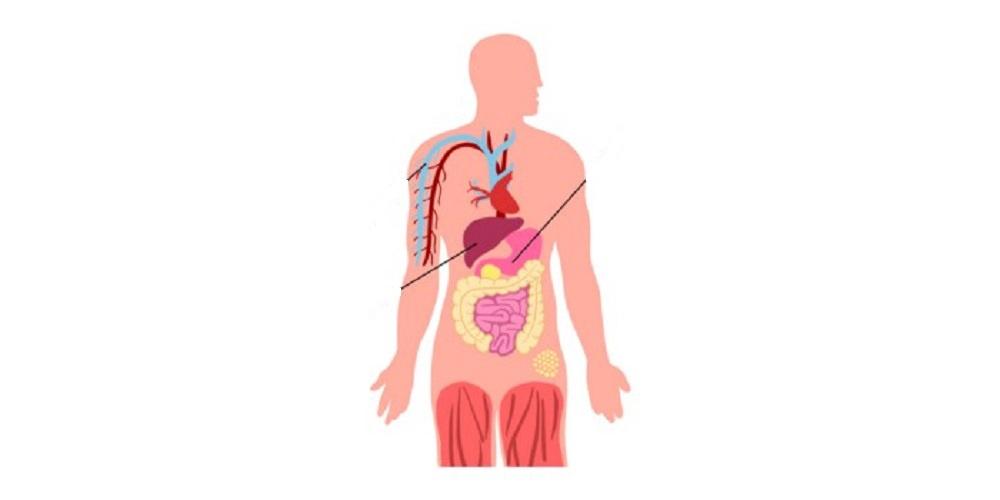 Oruç Fizyolojisi