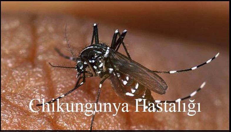 Chikungunya Virusu Sudan'ı perişan etti.