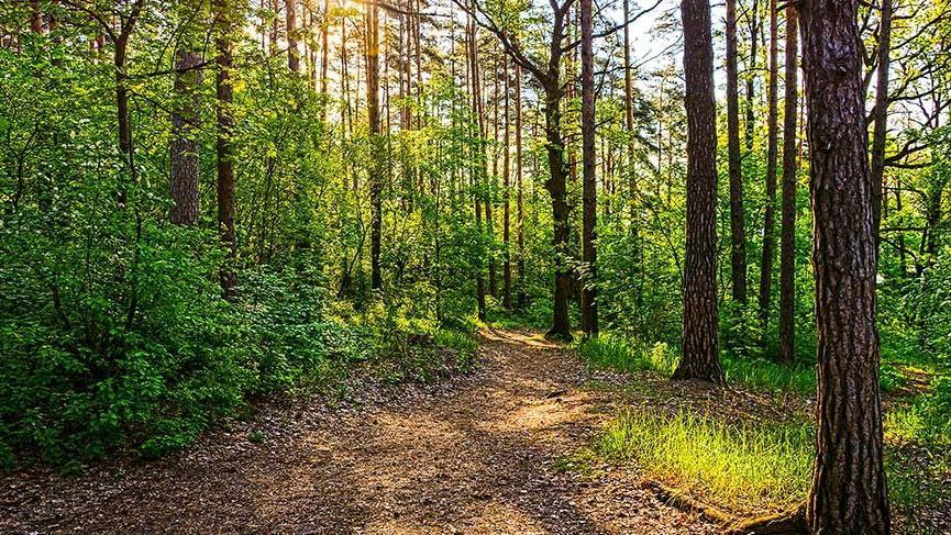 Orman yönetimi ve doğa koruma anlayışı.