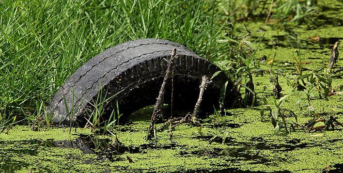 Su kirliliğinin etkileri nelerdir