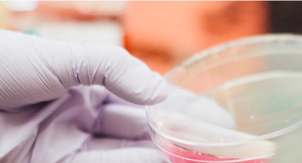Uygulamalı Temel Mikrobiyoloji Teknikleri Kursu