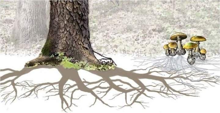 Yeraltı ağı; ayaklarınızın altındaki muhteşem bağlantılar…