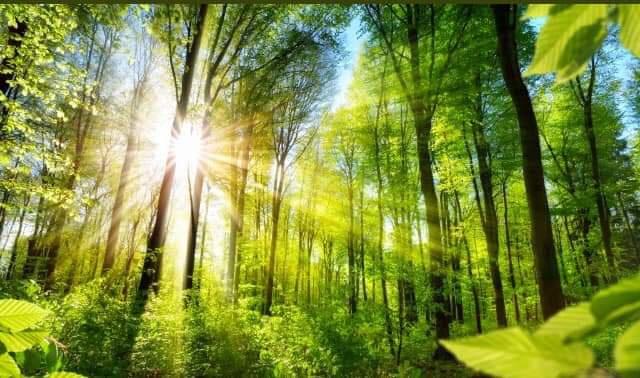 Ağaçlar neden bu kadar önemli?