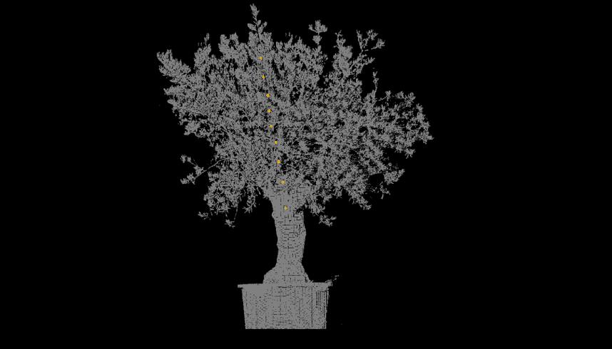 Ağaçların Uyku Çevrimleri İnceleniyor