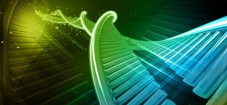 Genetik Çeşitliliğin Azalmasına Neden Olan Süreçler