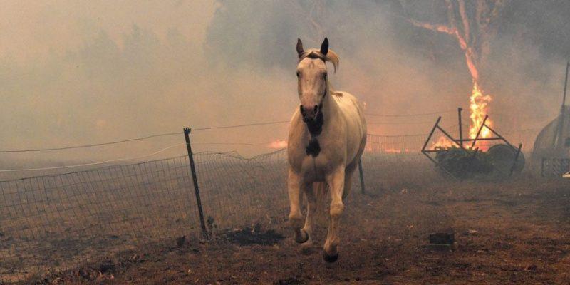 Avustralya'daki yangınlarda ölen hayvan sayısı güncellendi: 1,25 milyar